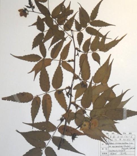 奄美市立奄美博物館所蔵植物標本目録
