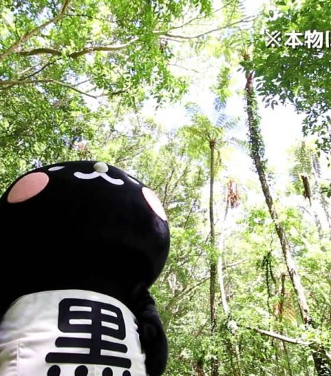奄美市PR動画「奄美市ふるさとCM」