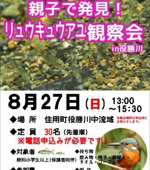 博物館「親子で発見!リュウキュウアユ観察会 in 役勝川」開催!